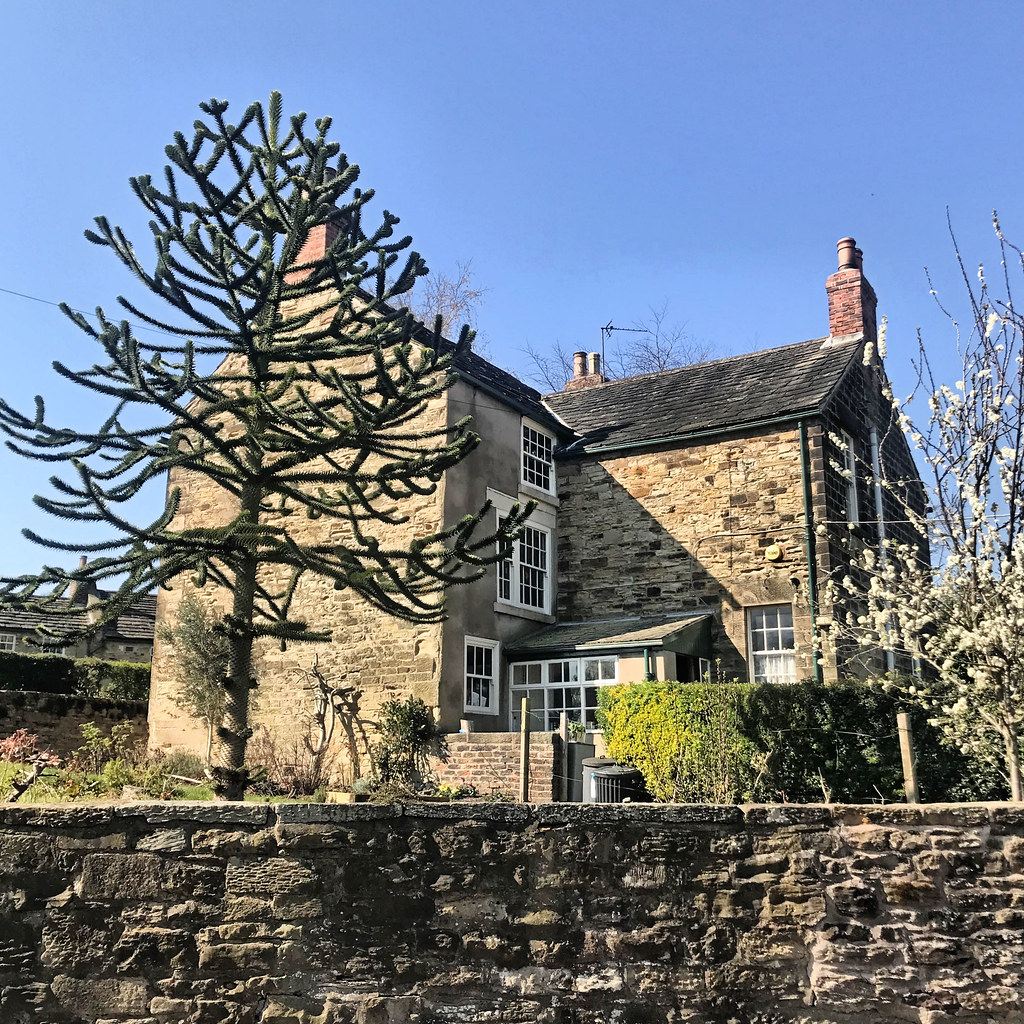 The house with the Monkey Puzzle tree.