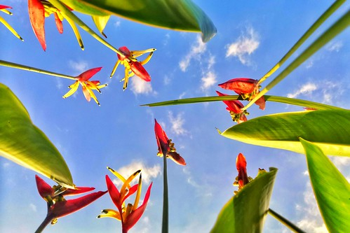 up pov flower spring birds paradise sky blue worm eyeview dont let me down tropics summer afternoon jog milkychance huawei p30 philippines