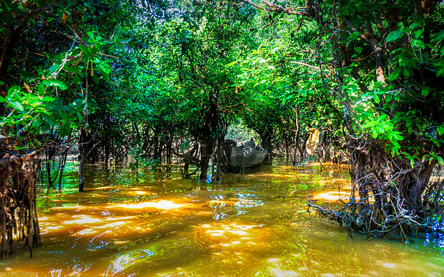 Beautiful mangrove forest of Kampong Phluk floating village, Cambodia.  898a