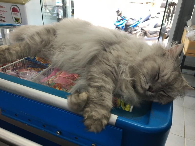猫様 hot weather koh samui