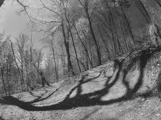 Tree shadows, 2021.04.09