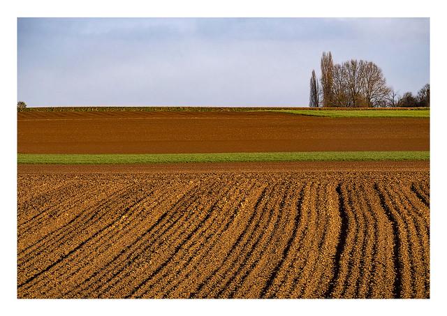 Wolder potatoe field