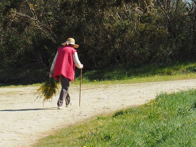 Un bouquet de genêt ...a bunch of broom