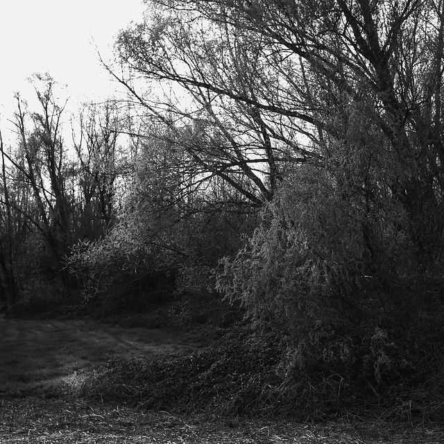 amazing tree @ walking path 3
