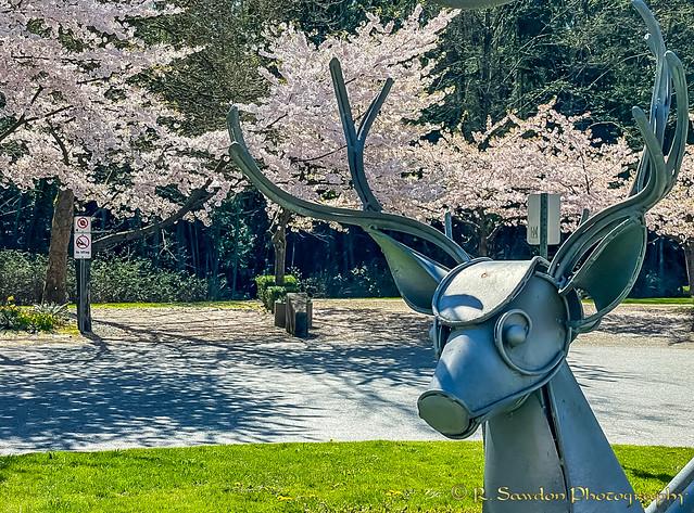 Deer photo-bomb