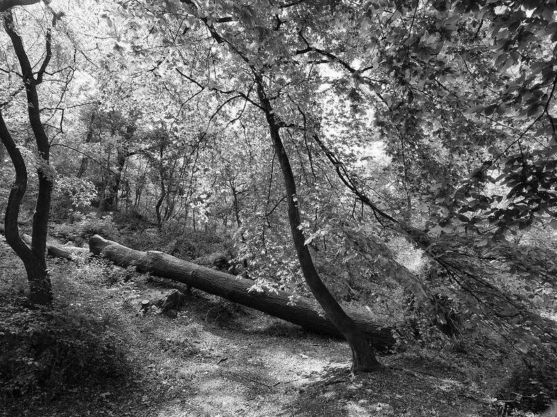 Blocked path bw