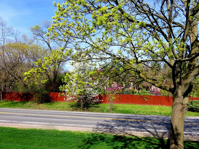 On Old Dixboro Road in Spring