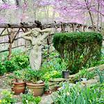 Cory's Wildflower Garden