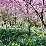 Spring Time, Ohio