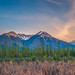 Travis Klingler (SivArt) posted a photo:A field of pussy willows surrounds this mountain pond in the Canadian Rockies.