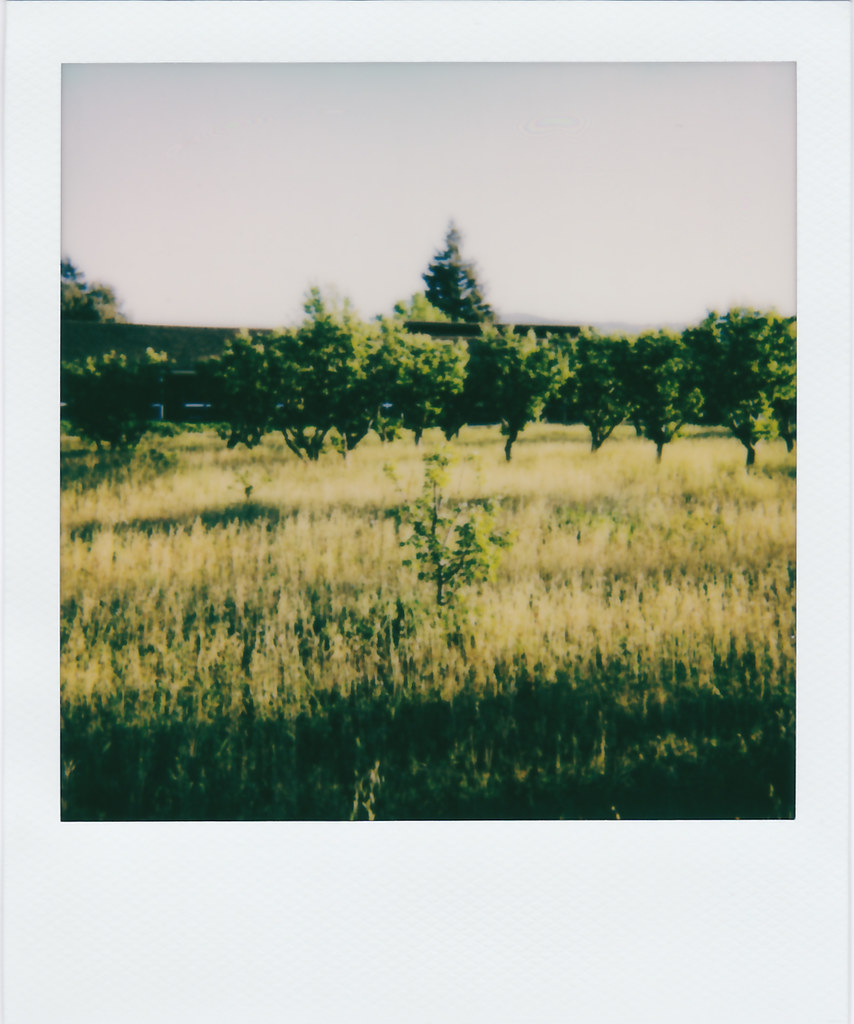 Library Orchard
