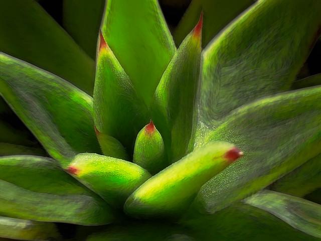 Succulenza verde