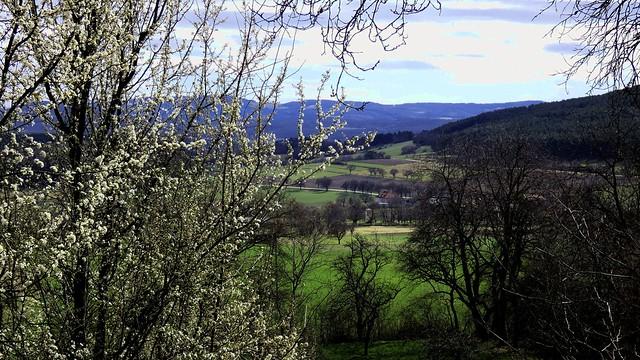 Frühling in Flatz / Spring in Flatz