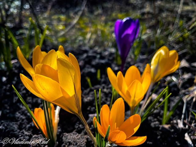 Hi, Spring!