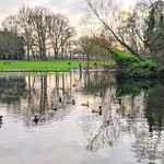 Birds on the lake at Haslam Park, Preston