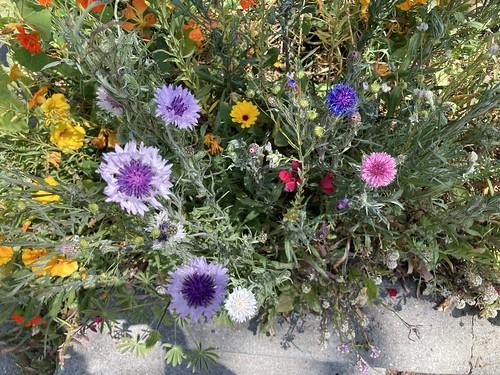 Flowers @ Oregon near Fulton