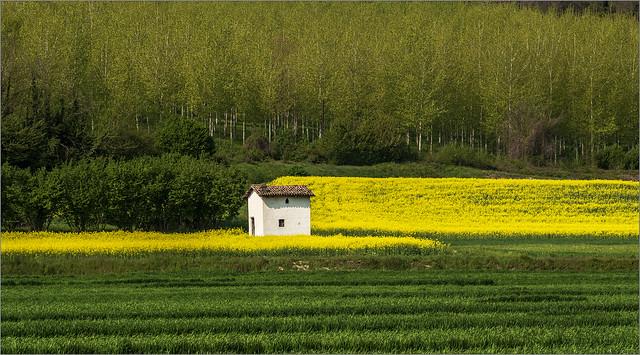 Spring near Cherasco ...