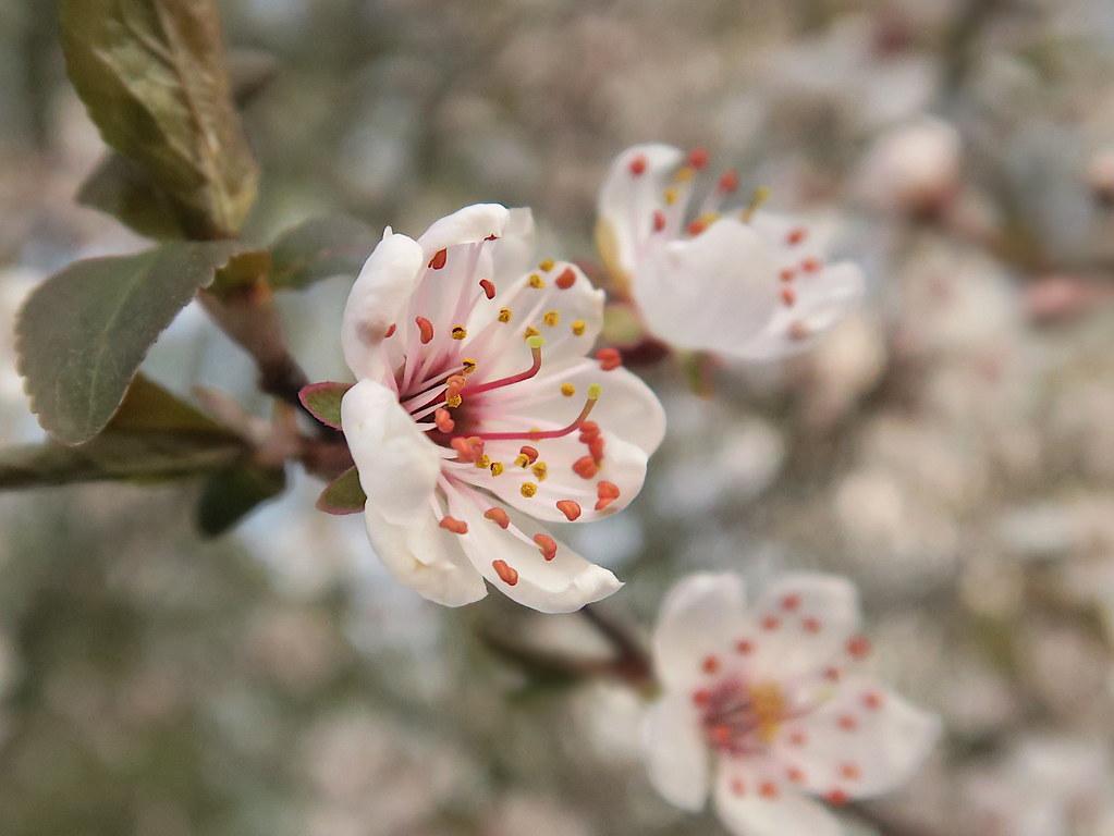 Immer wieder kommt ein neuer Frühling