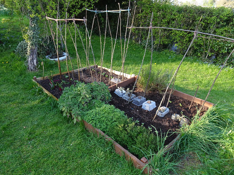Veg patch and herb bed - now with added poles