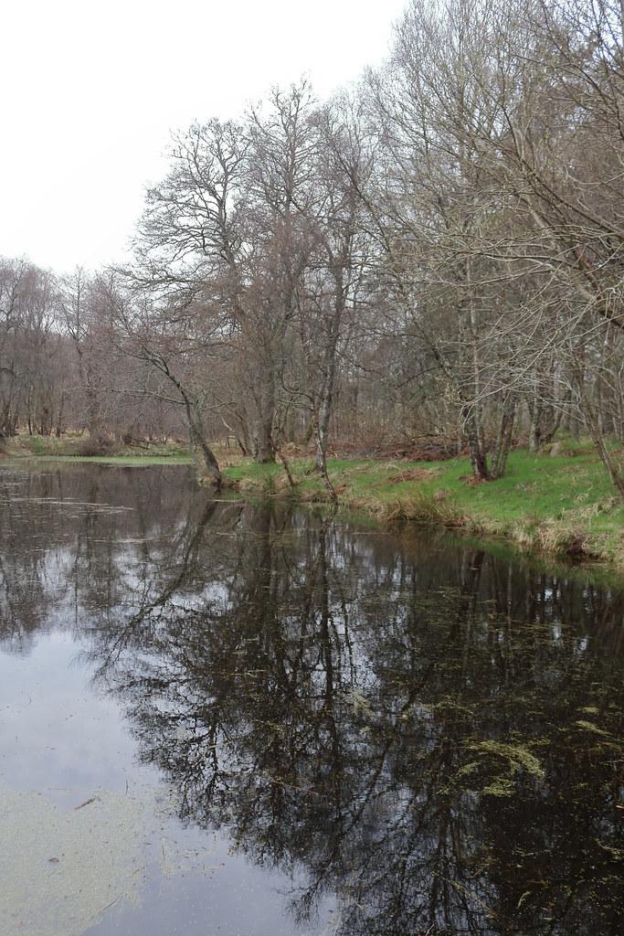 William Marnoch Pond,Murray Park,Alford_apr 21_5985