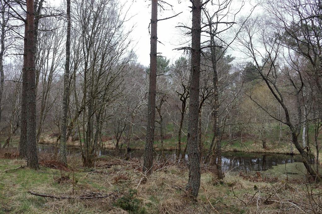 William Marnoch Pond,Murray Park,Alford_apr 21_5995