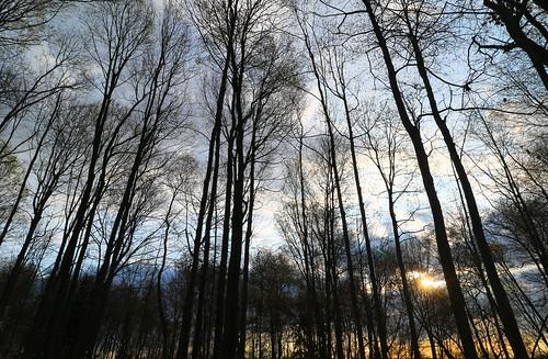 glorious morning forest trees sunrise londonontario darrellcolby
