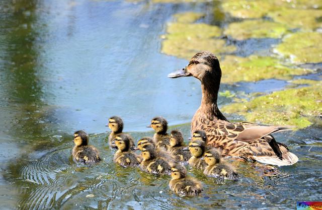 Une belle petite famille 😍