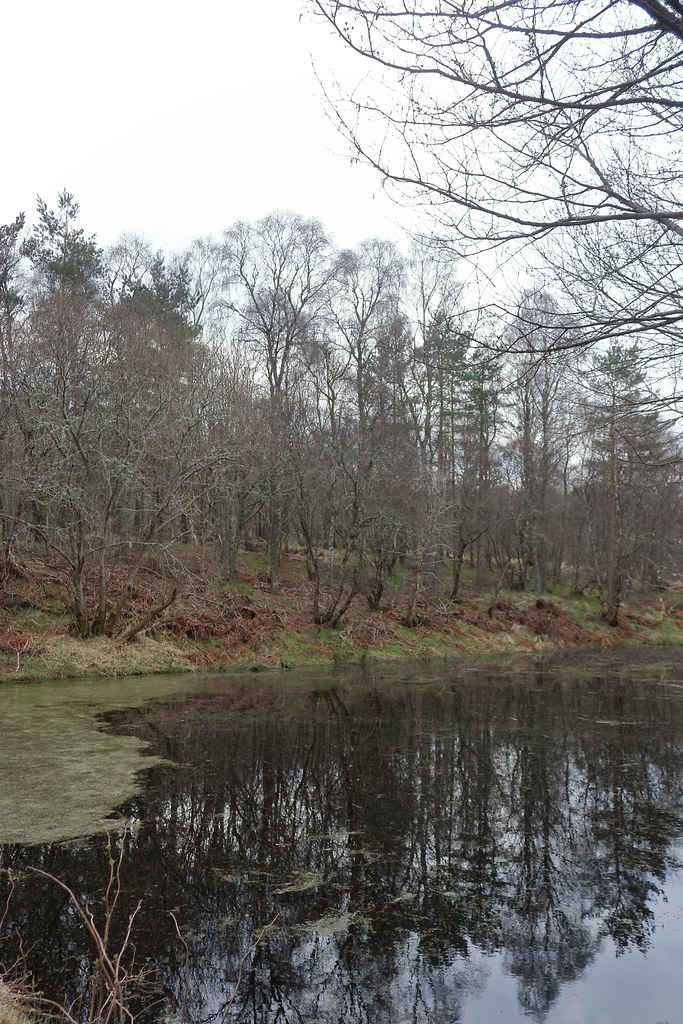 William Marnoch Pond,Murray Park,Alford_apr 21_5988