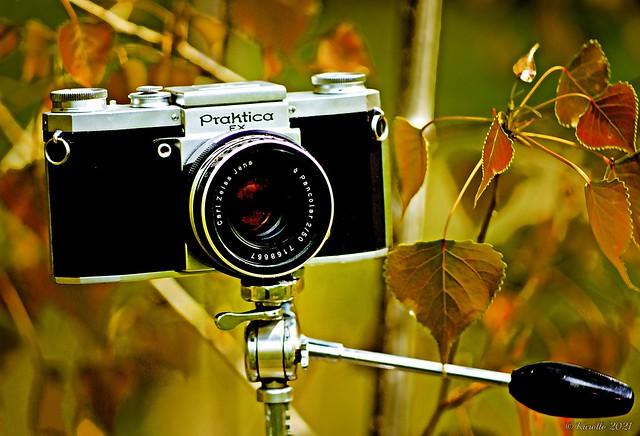 Carl Zeiss Jena DDR,  M42 -  Pancolar 50mm f/2 \