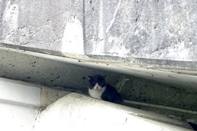 Today's Cat@2021−04−20