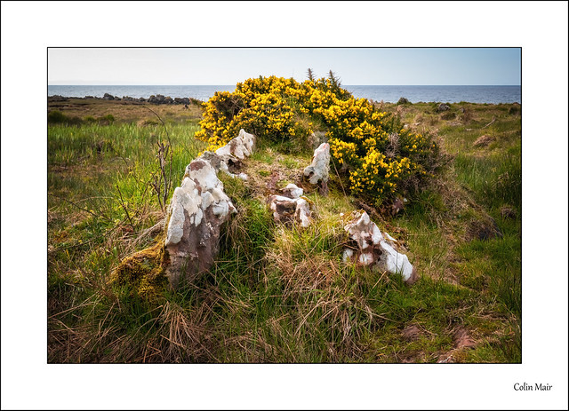 Rocks and bushes - 2021-04-17th