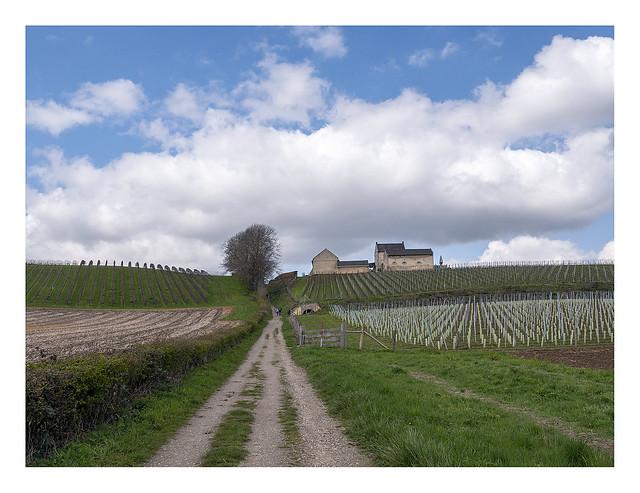 Louwberg vines