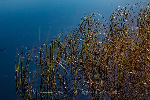 Lily Lake near Beartooth Highway
