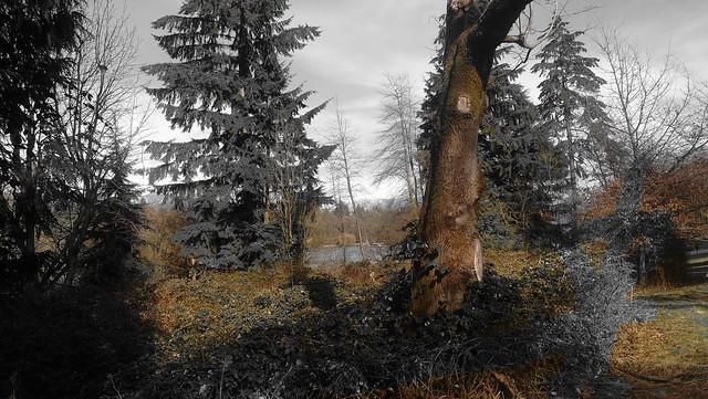 trees Stanley Park
