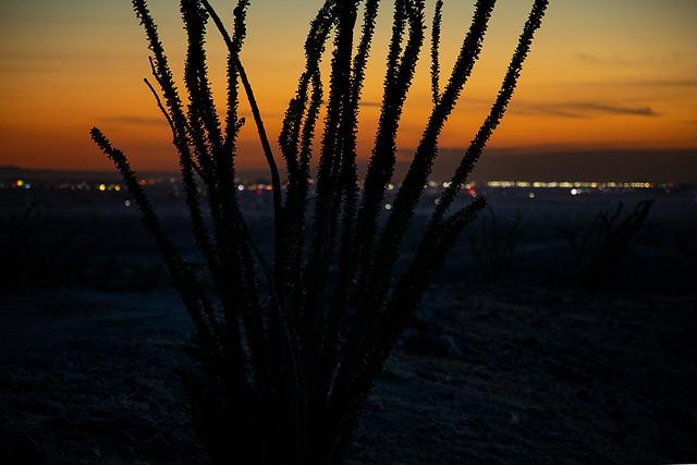 The Desert Margins