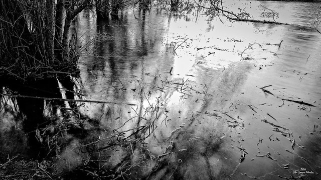 Dans les marais d'eau saumâtre