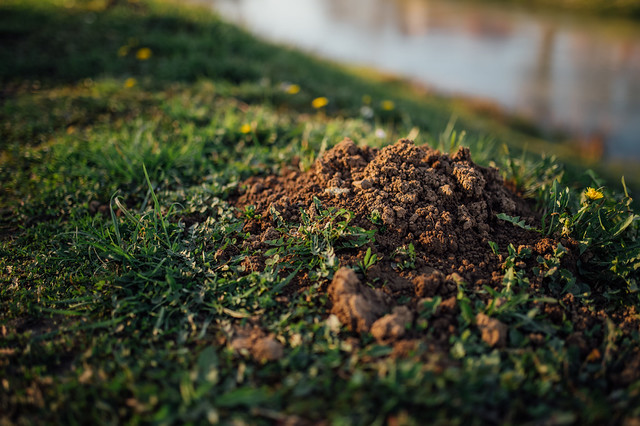 Close-up of a mole hill on a riverbank