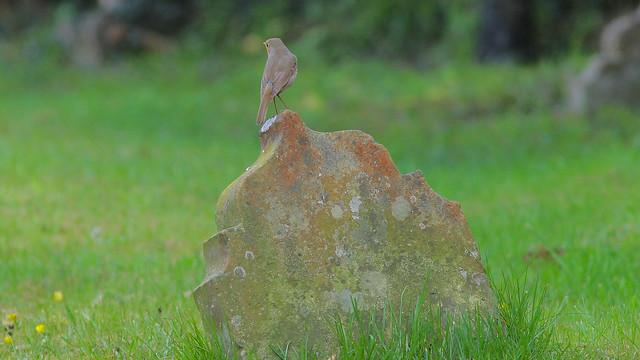 Churchyard @ Brasted Kent