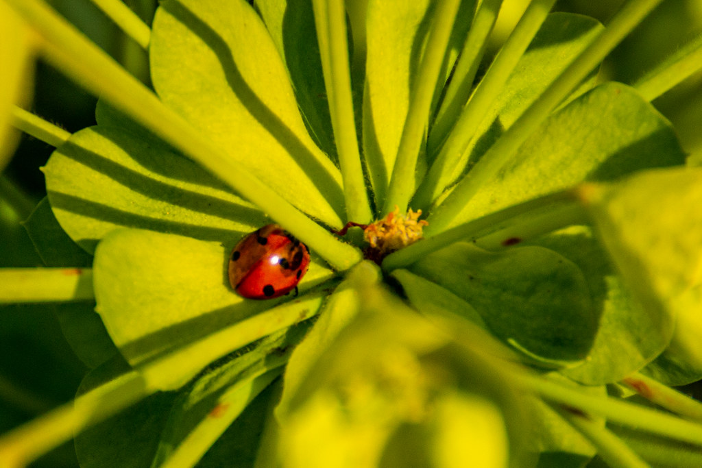 2021 - 04 - 17 - EOS 600D - Ladybird resting - Chester Zoo - 001