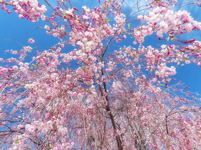 Blossom Sprinkler 4u2c
