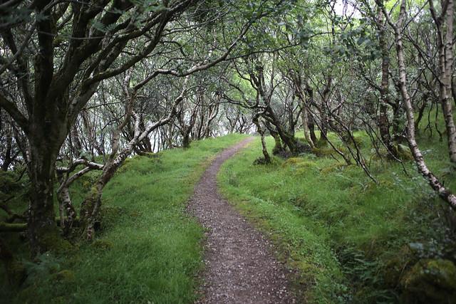 Woodland at Kylesku