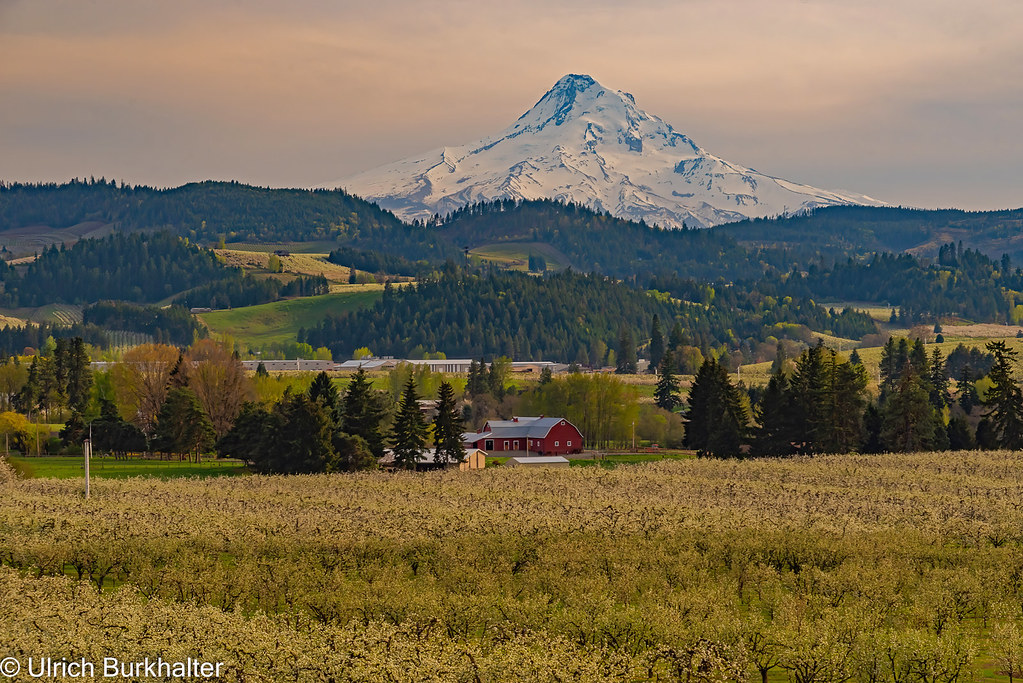 The Orchards in Hood river Valley
