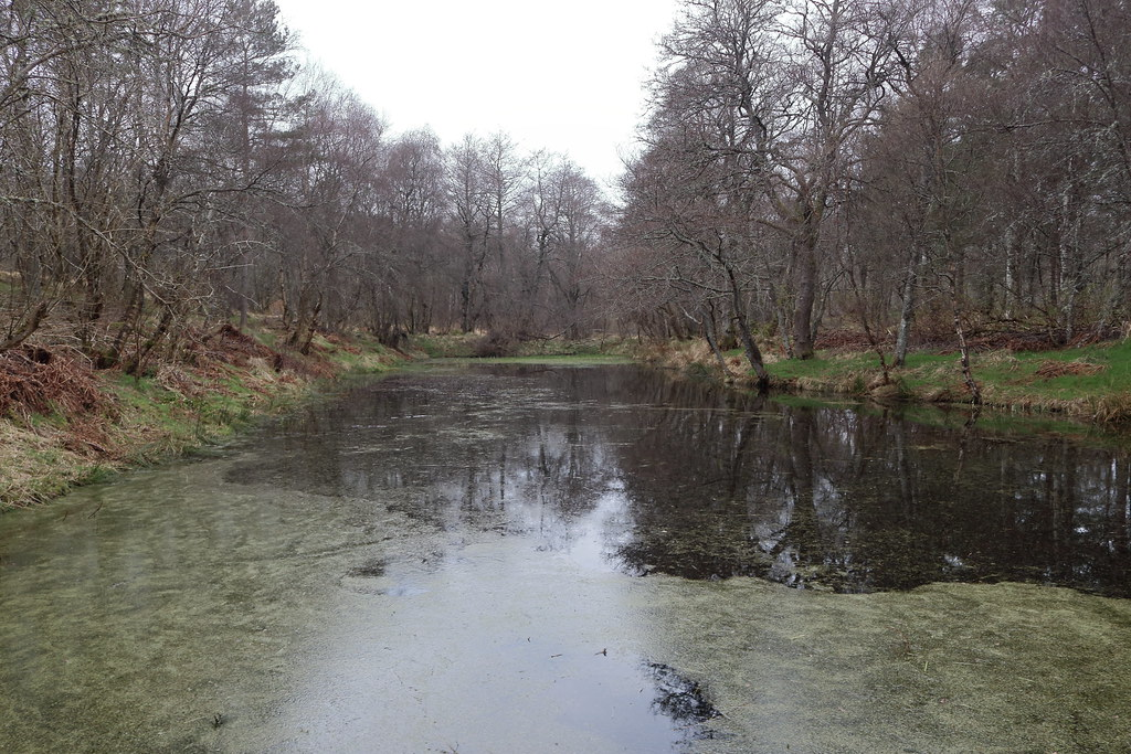 William Marnoch Pond,Murray Park,Alford_apr 21_5984