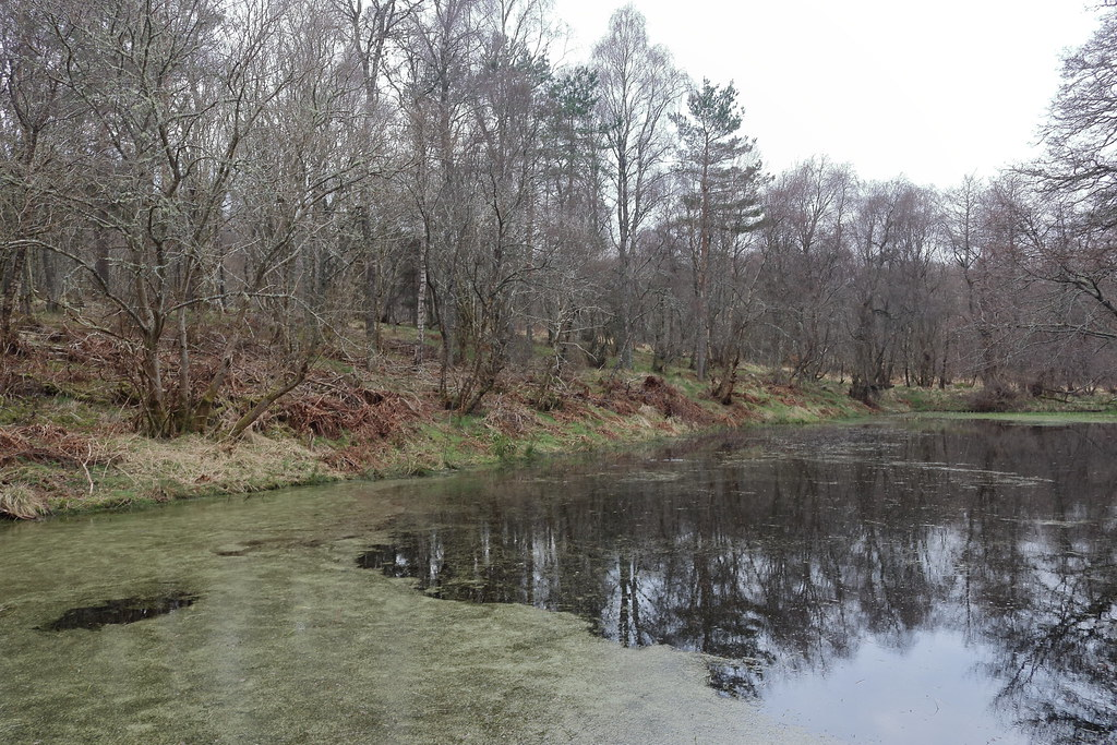 William Marnoch Pond,Murray Park,Alford_apr 21_5986