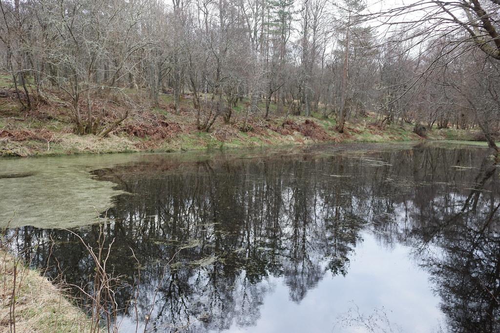 William Marnoch Pond,Murray Park,Alford_apr 21_5987