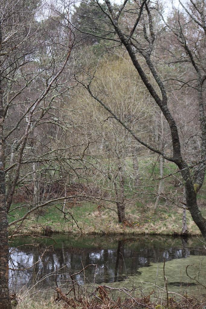 William Marnoch Pond,Murray Park,Alford_apr 21_5996