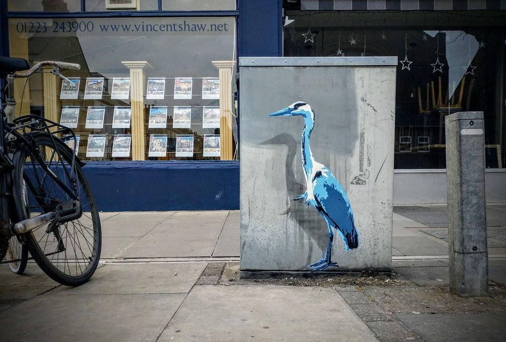 Urban blue heron