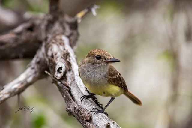 Armchair Traveling - Darwin's Finch on Galapagos Islands