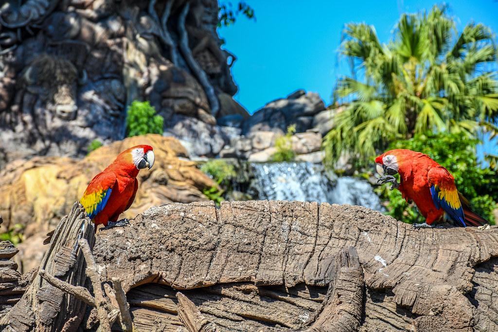 Two Parrots waterfall ToL AK