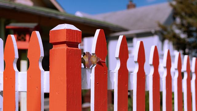 Fresh Fence